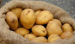 Gắn tem cho khoai tây Đà Lạt